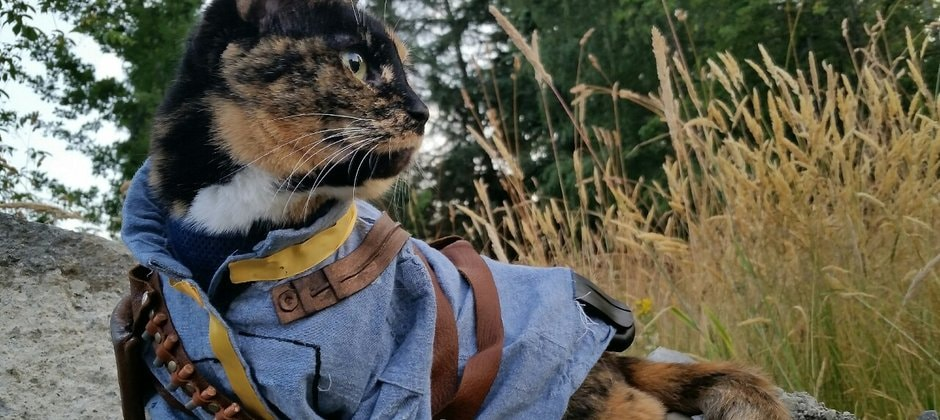 Встречайте: кот из Fallout!