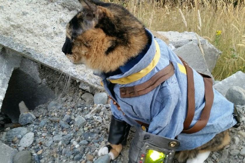 grus-Fallout-kot1
