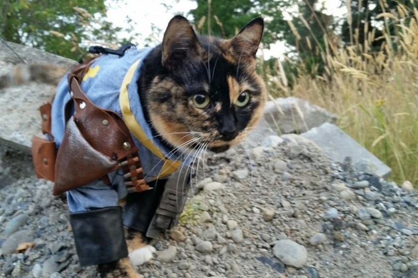 grus-Fallout-kot2